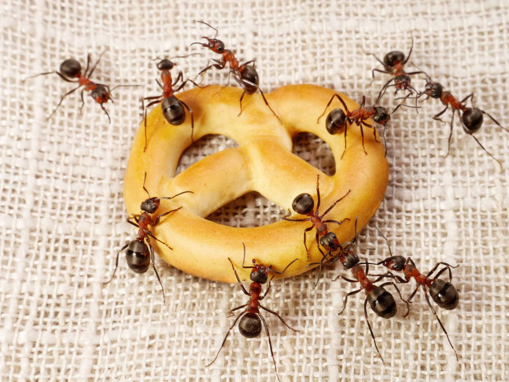 Pest Control Tips Inside Your Home